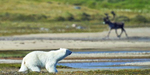 Voyage faune et nature Québec, Labrador