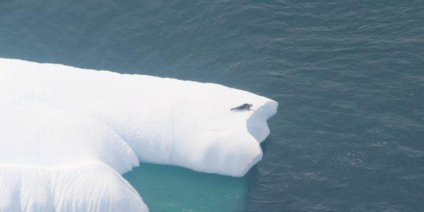 014_phoque et iceberg (002)