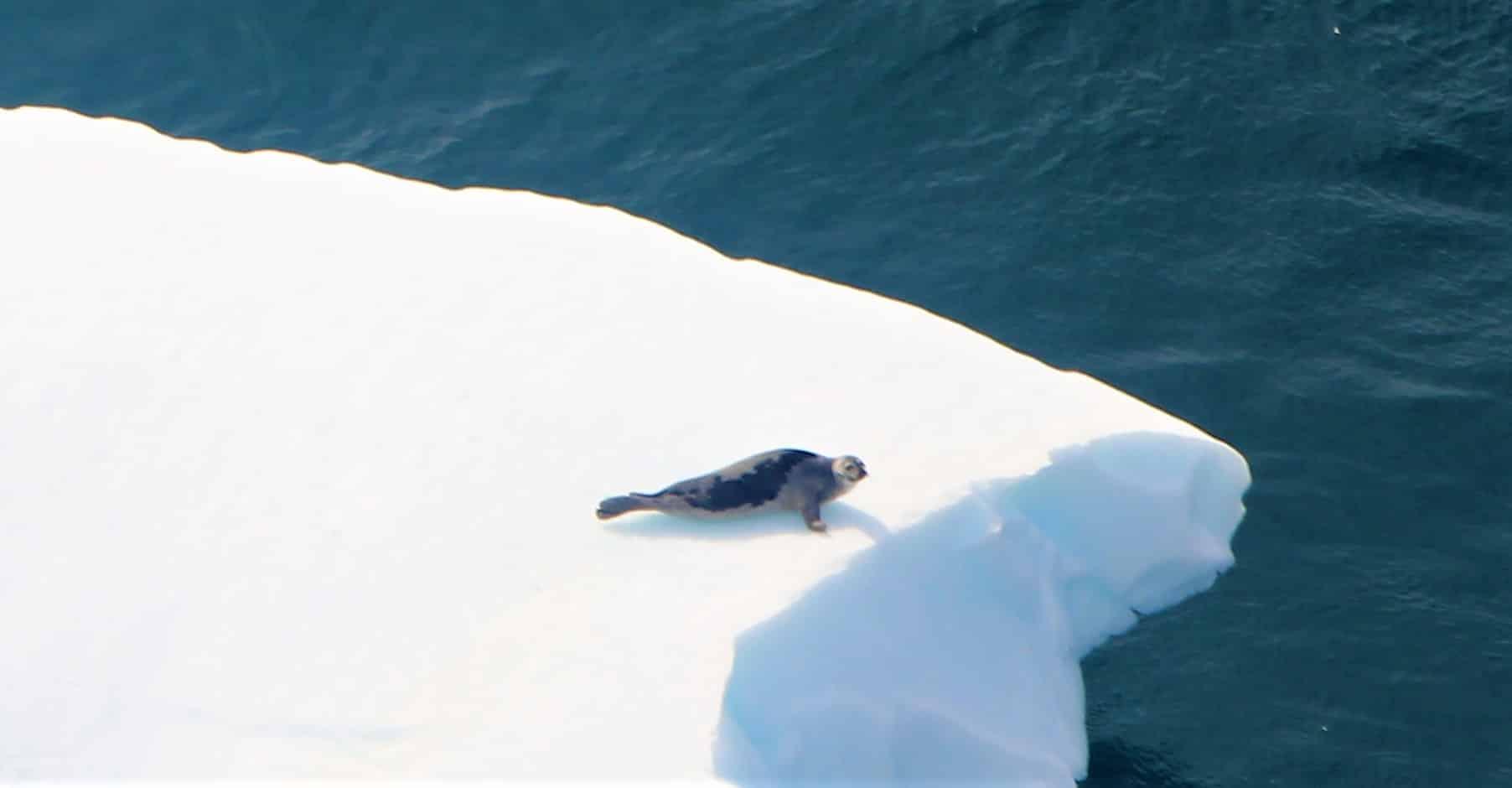 Côte du Labrador
