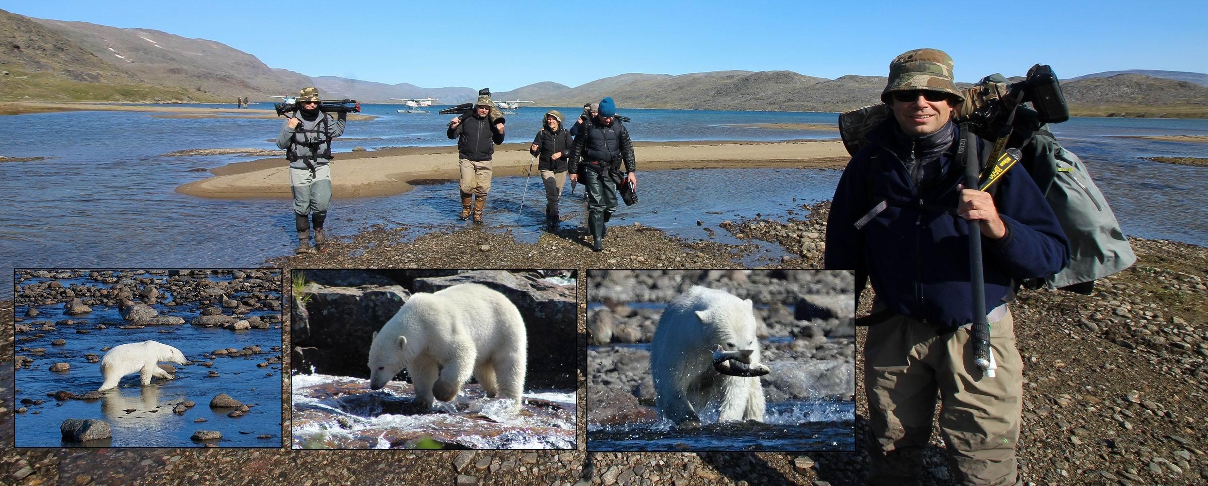 Polar Bear Watching in Labrador