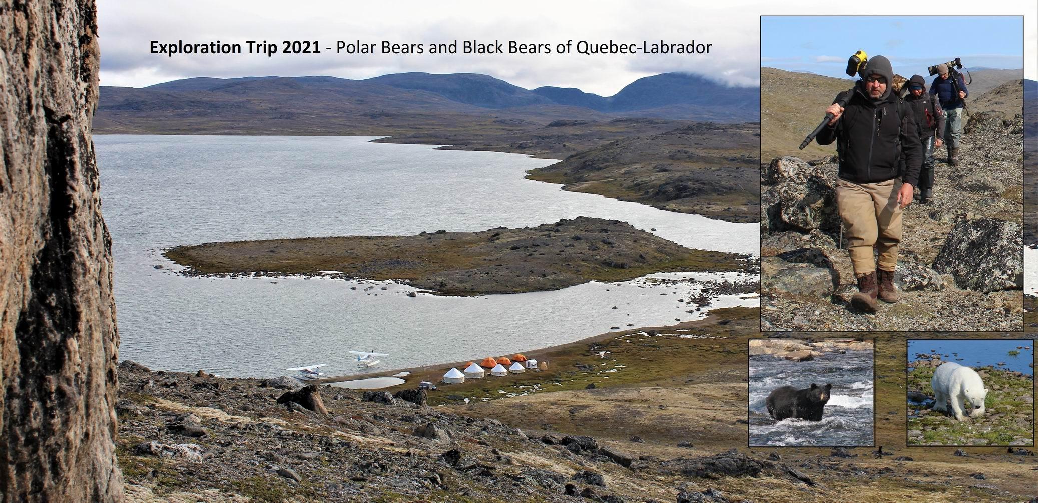 Exploration Trip - Polar Bears and Black Bears of Quebec-Labrador